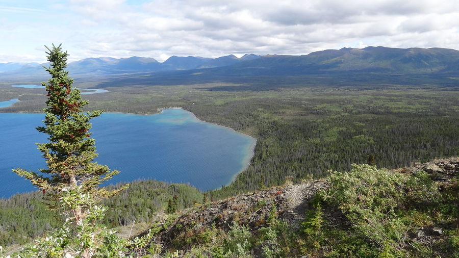 Beauty In Nature Canada Cloud - Sky Day Grass Kathleen Lake King's Throne Kluane National Park & Reserve Lake View Landscape Mountain Mountain Range Mountains Nature No People Outdoors Scenics Sky Tranquil Scene Tranquility Tree Water Yukon