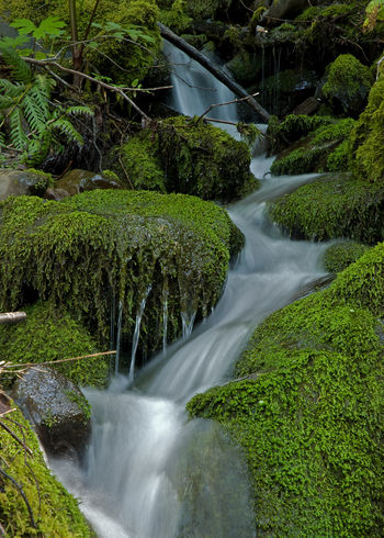 Flowing water fall over very green mossy rocks. Pacific Northwest, Washington State Green Green Green!  Green Color Beauty In Nature Blurred Motion Day Dripping Water Forest Green Color Long Exposure Motion Nature No People Outdoors Scenics Sky Tree Very Mossy Water Waterfall