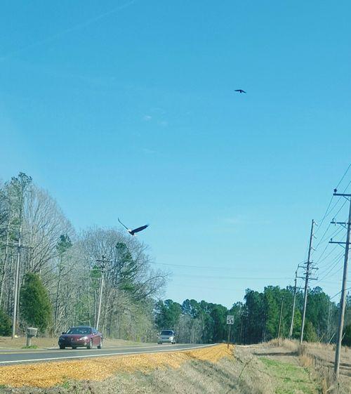 Outdoors Motion Transportation Flying Bird Bald Eagle In Flight Sky Day EyeEm Nature Lover Car Tree Mode Of Transport Nature Animal Themes Nationalbird