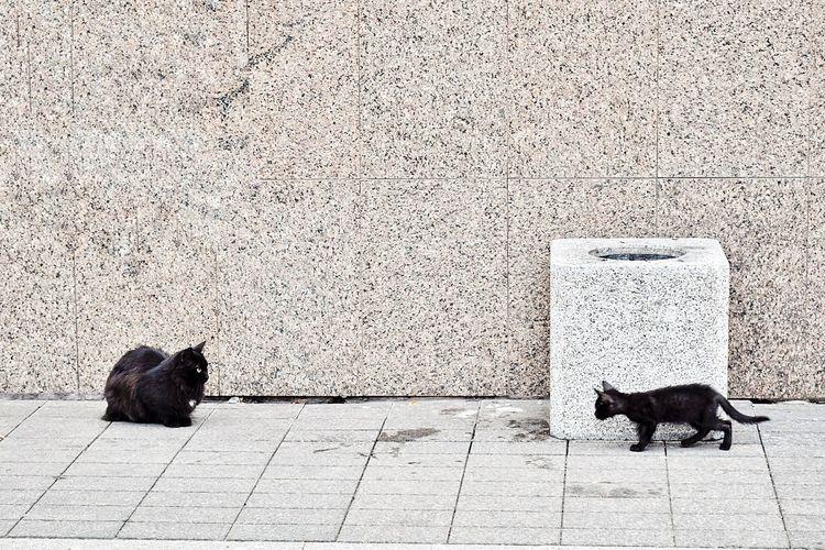 Samara cats 😸 Domestic Animals Pets Animal Themes Mammal One Animal Black Color Vertebrate Road Feline Cat Zoology Domestic Cat Animal Loyalty Homelessness  Lying Down Pampered Pets Resting Day Black Cat Black Cats Samara