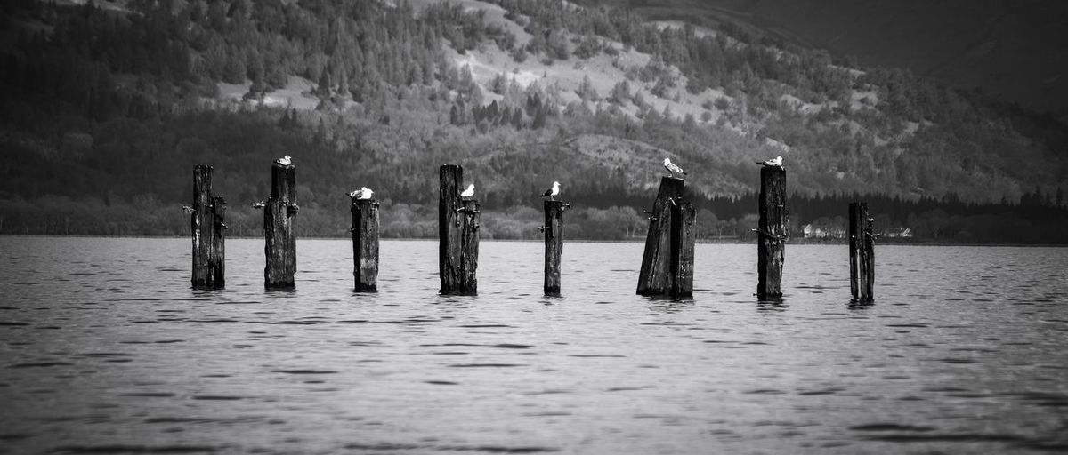 Seagulls Water Wooden Post Flood Lake Lakeside Calm Waterfront Standing Water Countryside Lakeshore
