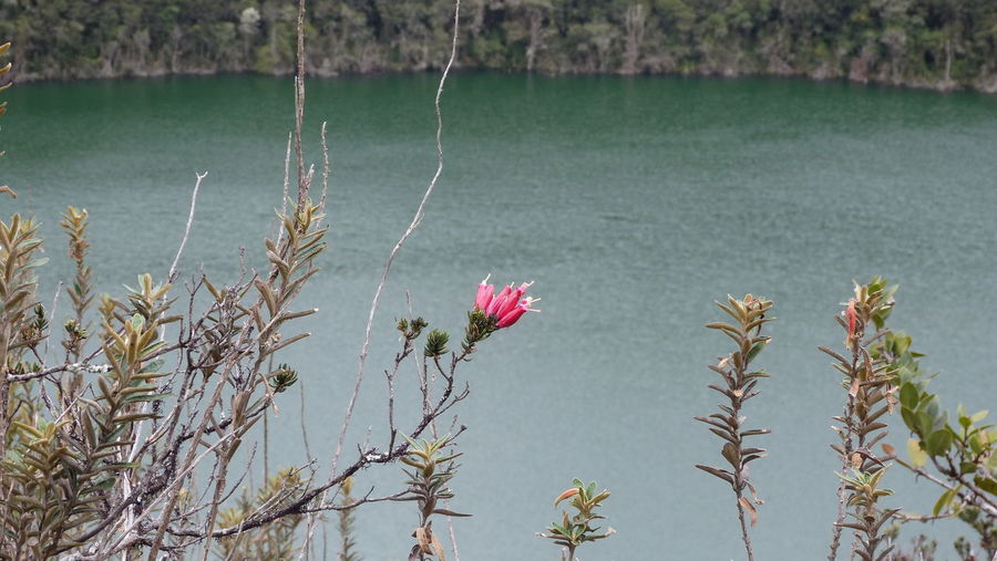 Close-up of flowers against calm lake
