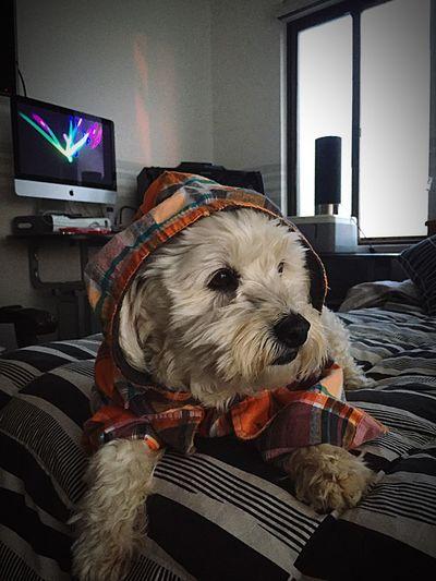 Hay veces en que mi cumpa, tiene uno que otro problema existencial!! Domestic One Animal Pets Mammal Domestic Animals Canine Dog