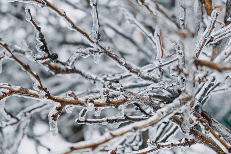 Close-up of frozen bare tree