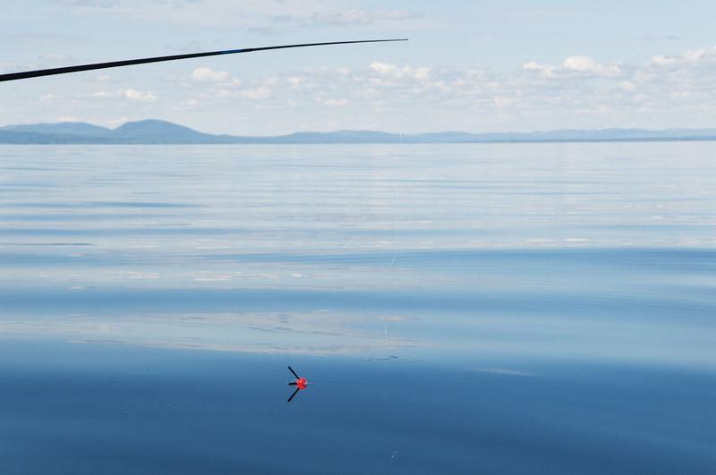 Bird flying over sea