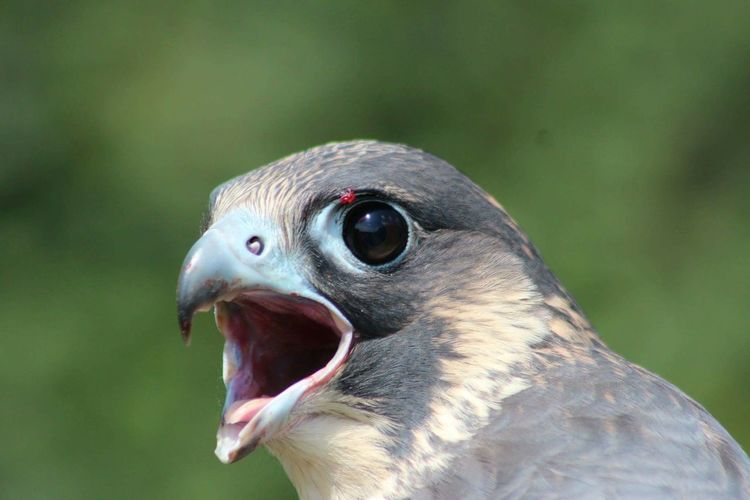 Birds Of Prey Birds