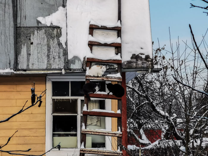 Houses and bare trees by building during winter