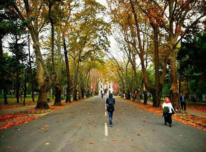 Son Bahar || İstanbul Üniversitesi Beyazıt Kampüsü Istanbulhayatı öğrencihayatı Istanbul Turkey Zharipxistanbul Yellow Road Cadde