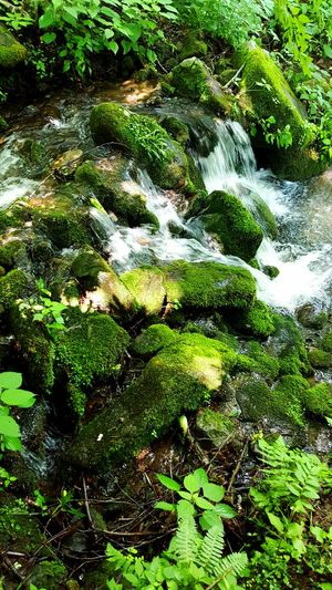 Moss Moss & Lichen Moss On Rock Peace Abundance Serenity Growth Water Textures And Surfaces Beauty In Nature Flowing Water Great Smoky Mountains  North Carolina
