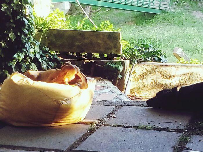Siesta. No People Dogs Of EyeEm Doglife Natulareza Nature Dog Pets Outdoors Dog Sleeping  Nap Time