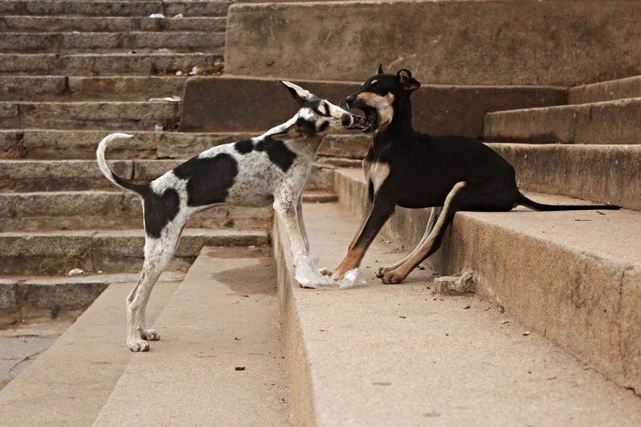 Animal Themes Brick Wall Day Dog Dogsfighting Domestic Animals Mammal No People Outdoors