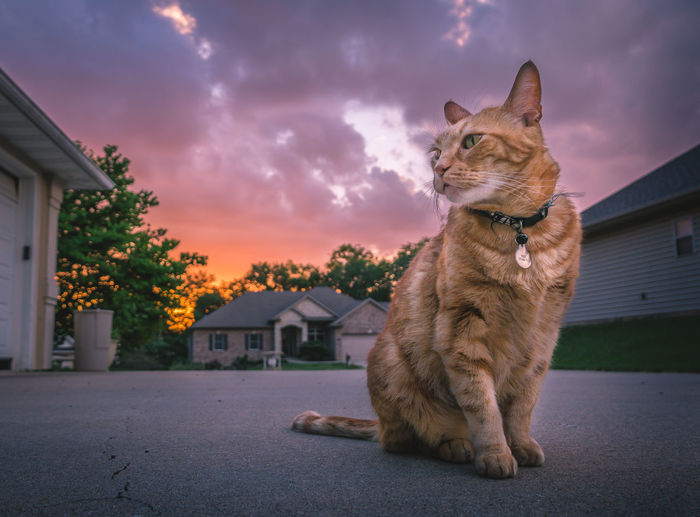 Animal Animal Themes Architecture Building Exterior Built Structure Cat City Cloud - Sky Domestic Domestic Animals Domestic Cat Feline Ginger Cat Looking Mammal Nature No People One Animal Pets Sky Vertebrate Whisker