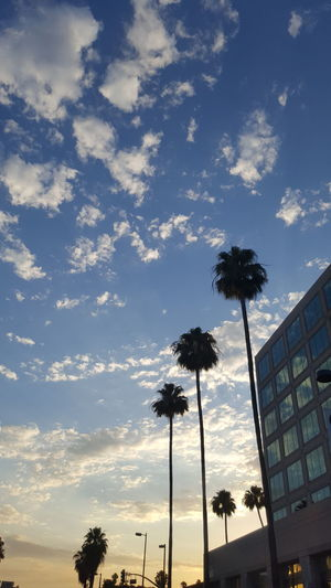 Blue Sky And Clouds Reflections Palm Trees Clouds In The Windows Palm Trees And Sunset