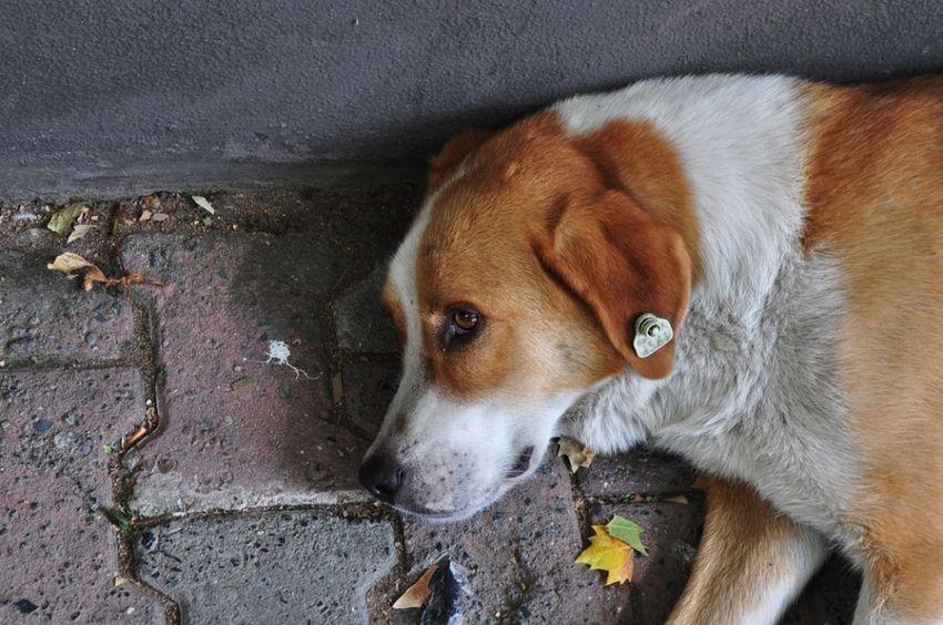 Dog❤ Dogslife Dog Love Bestfriend Animal Themes Animal Photography Animal Body Part Dogs Of EyeEm Dogoftheday Beautifulanimal Köpeksevgisi Köpeklerisevelim Innocent Face Masumiyet
