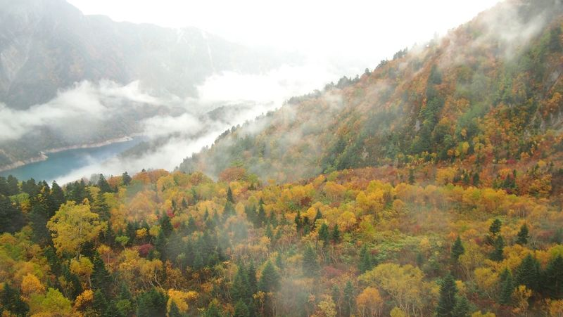 EyeEm Nature Lover Japan Hello World Mountain View Mountains Valley Lake Autumn Leaves Autumn Colors Yellow Leaves Landscape_Collection Kurobe Mist 立山 黒部 The Great Outdoors - 2016 EyeEm Awards 43 Golden Moments