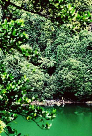 Jungle Vibes Green Color Lakeshore Lake View Lake Green Color Plant Growth No People Day Nature High Angle View Beauty In Nature Tree Lush Foliage Sunlight Backgrounds Foliage Full Frame Outdoors Field Freshness Tranquility Water Abundance