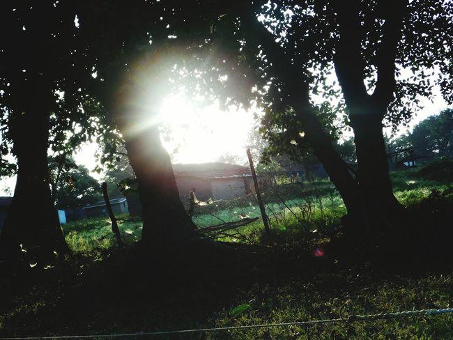 Relaxing Green Nature Beautiful Creation Blush Peaceful Moment Sun