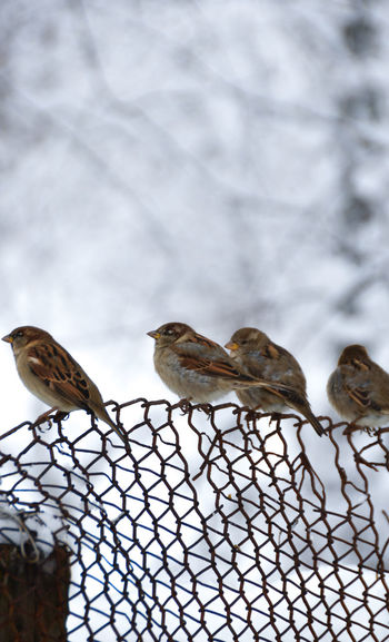 Low angle view of birds perching on fence