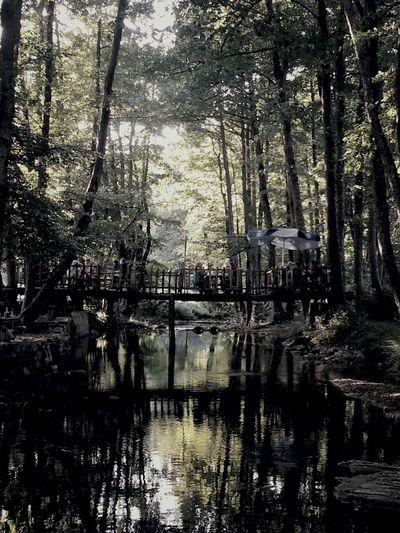 Nature River Peace