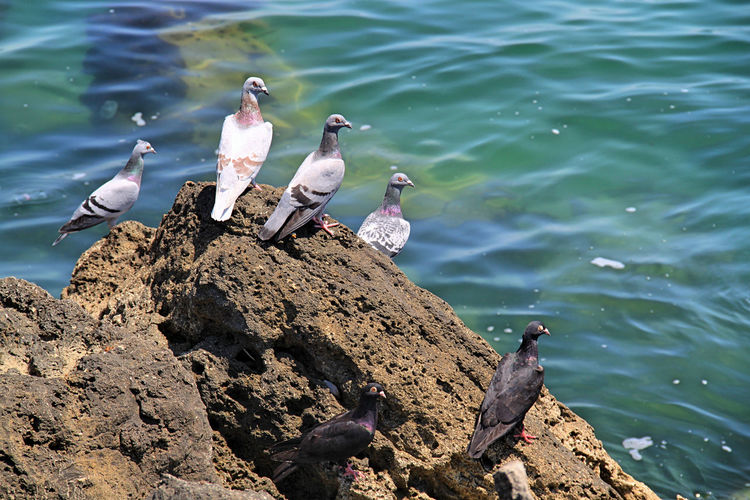Group Of Birds Perched On Rock