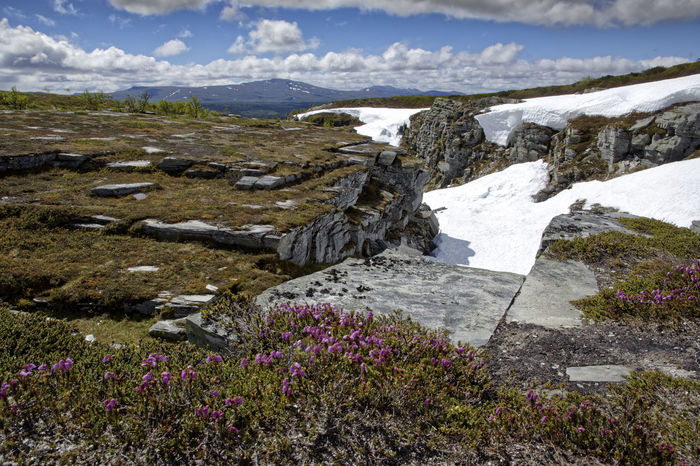 Snow In June Sweden Views Beauty In Nature Day Flora And Fauna Landscape Mountain Nature No People Outdoors Scenery Scenics Sky Snow Tranquil Scene Tranquility Tänndalen