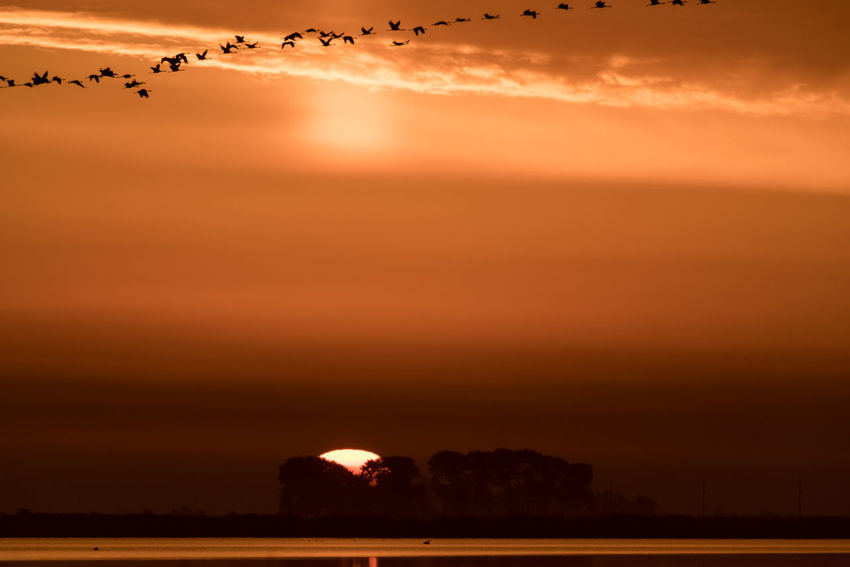 At Sunrise Animals In The Wild Bodden Nature Sunrise Collection Animal Themes Beauty In Nature Beauty In Nature Birds Cloud - Sky Day Flying Landscape Nature No People Orange Color Outdoors Scenics Sea Silhouette Sky Sun Sunrise Tranquil Scene Tranquility Water