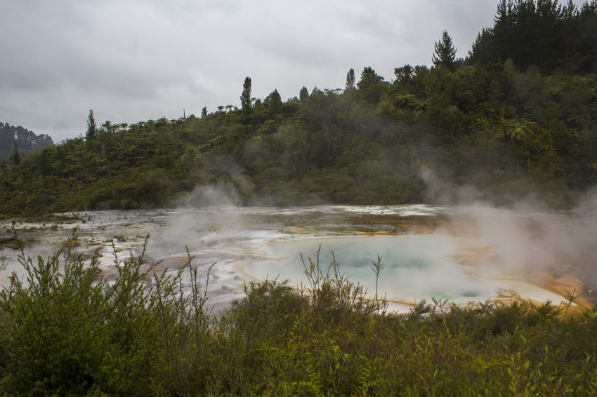 Steam rising from colorful terrace on geothermal landscape Impressive Scenic Steam Travel Wanderlust Beauty In Nature Boiling Water Earthquake Environment Geological Formation Geology Geothermal  Geothermal Activity Geysers Heat - Temperature Hidden Valley Hot Pools Hot Spring Landscape Nature New Zealand Power In Nature Scenics - Nature Steam Volcanic