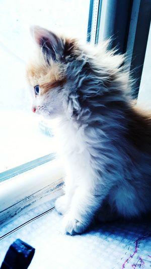 Pets Konya Cat