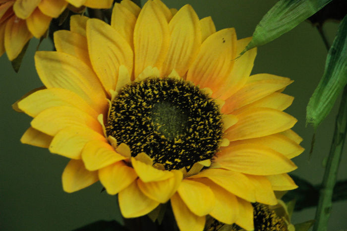 Artificial Artificial Flower Close-up Day Fake Flower Flower Head Growth Nature Outdoors Plant Sunflower Yellow