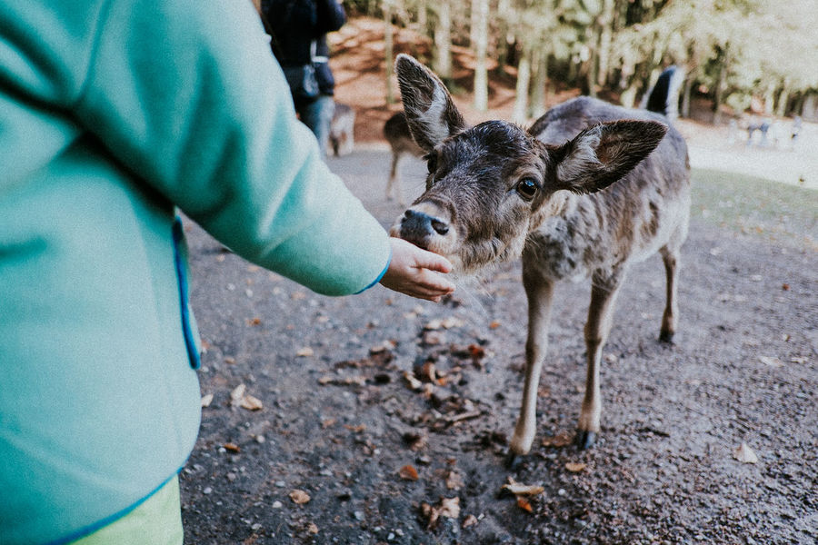 Adult Animal Wildlife Animals In The Wild Close-up Day Deer Feeding  Human Body Part Human Hand Kid Lifestyles Mammal Men Midsection Nature One Animal One Person Outdoors People Petting Zoo Real People Red Deer Stroking Young Adult Zoo