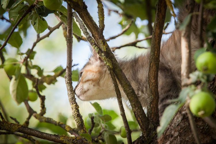A cute tricolor kitten climbing a tree Climb Tree Animal Animal Themes Branch Cat Kitten Mammal No People One Animal Plant Tree