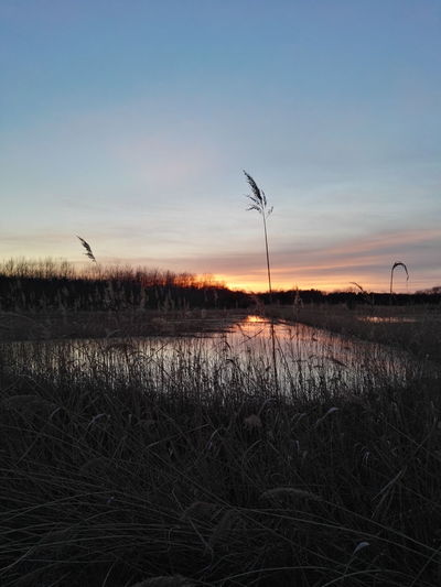 Lake View Sunset No People Nature Tree Sky Water Reed Rural Scene
