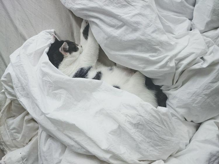 Cat Catoftheday Open Edit Schlumpelkater