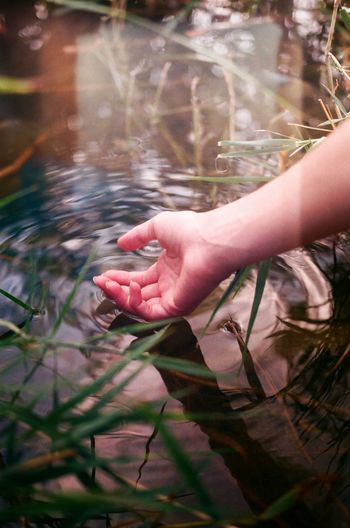 Close-up of woman hand with plants in water