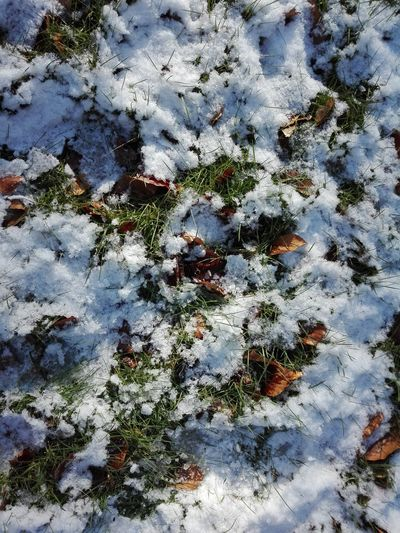 Snow on Forest