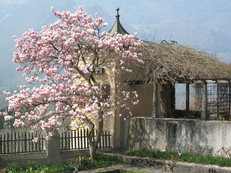 Architecture Beauty In Nature Blossom Branch Built Structure Day Flower Flower Head Fragility Freshness Growth Horizontal Nature No People Outdoors Pink Color Plum Blossom Sky Springtime Sunlight Tree