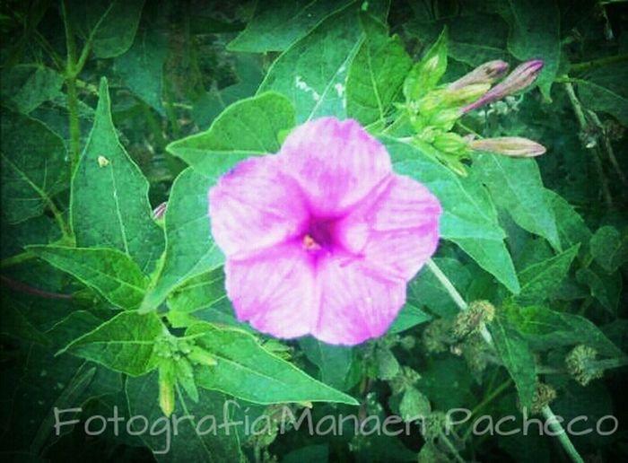 La belleza a flor de piel