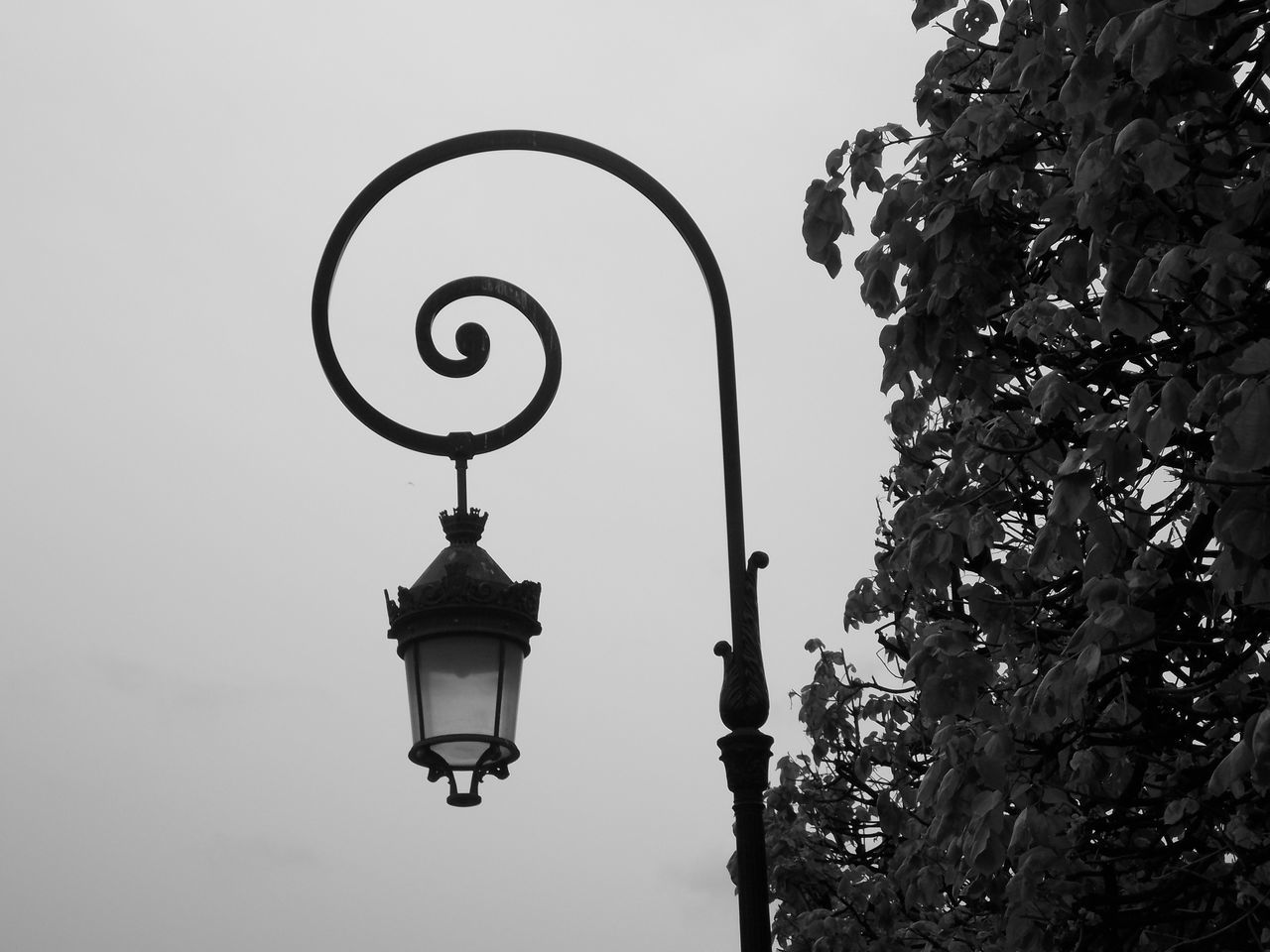 Low Angle View Of Street Light By Tree Against Sky