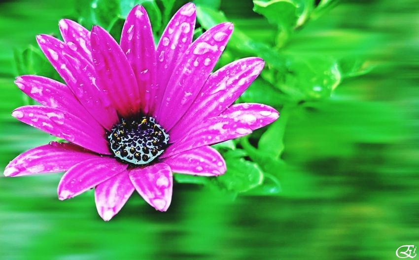 Green And Purple Flower