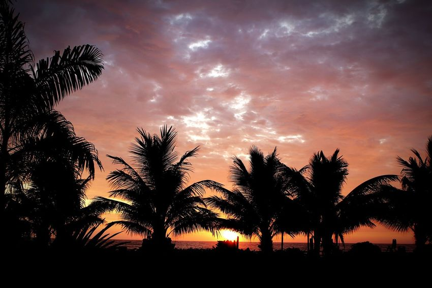 Sunset Igniting Silhouette Tree Nature Dramatic Sky Landscape Sky Social Issues Beauty Beauty In Nature Scenics Outdoors No People Night