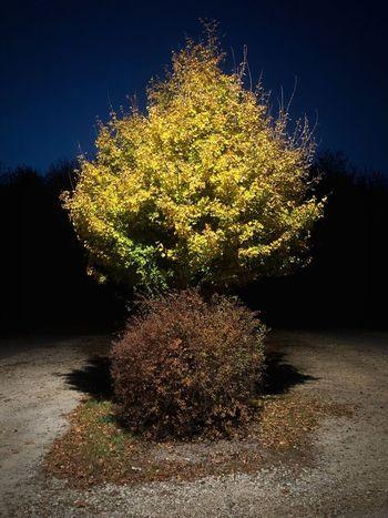 Plant Illuminated Night No People Nature Tree Growth