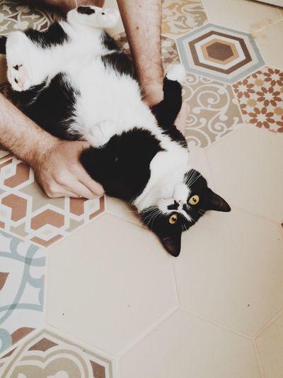 Cat Tiles Floor