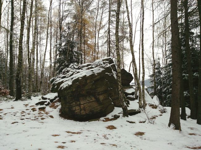 Winter Cold Temperature Snow Tree Nature Forest Beauty In Nature Frozen Day Landscape Outdoors Tranquility Ice No People Sky Forest Photography Tranquility Tranquil Scene Landscapes Rock Pobershau Katzenstein Erzgebirge Beauty In Nature