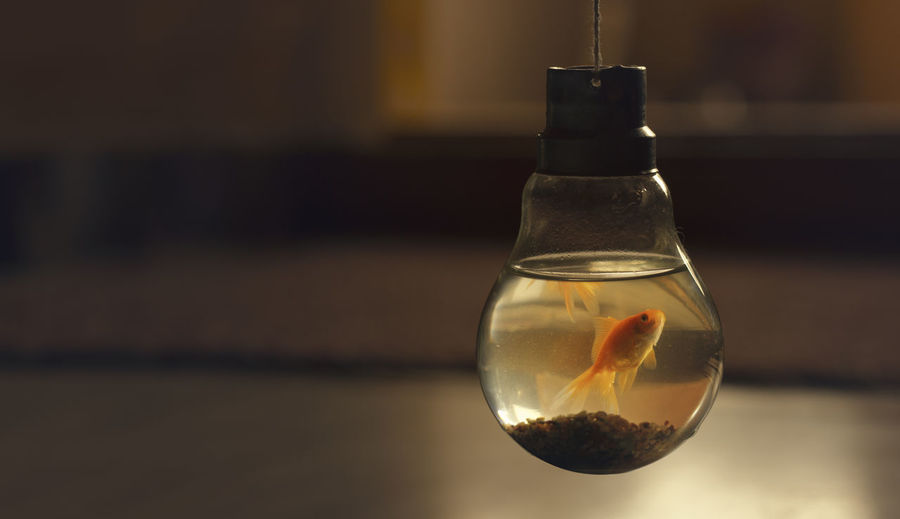 Fish in the bulb Transparent Glass - Material Focus On Foreground Indoors  Reflection Single Object Water Animal Animal Themes Container Glass Fish Nofreedom Restricted Limited Caged Freedom Caged Animals Caged In Container Freedomlost Aquarium Life