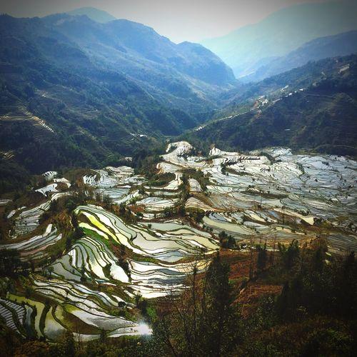 Ethnic Minorities in Yunnan Yuanyang Terraced Fields