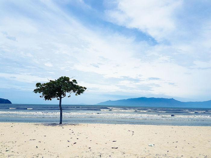Beach Sea Tree