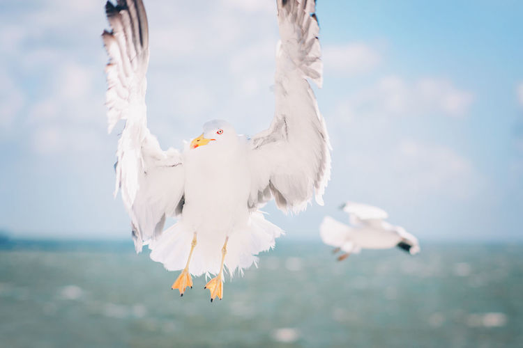 Animal Animal Themes Animal Wildlife Animals In The Wild Bird Cloud - Sky Day Flying Focus On Foreground Group Of Animals Nature No People Outdoors Sea Seagull Sky Spread Wings Two Animals Vertebrate Water White Color