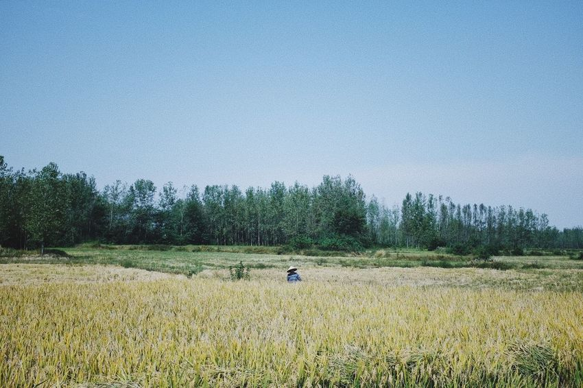 Agriculture Beauty In Nature Clear Sky Copy Space Countryside Day Environment Field Grass Growth Land Landscape Nature One Person Outdoors Plant Real People Scenics - Nature Sky Tranquil Scene Tranquility Tree