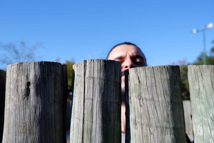 Peeking Fence
