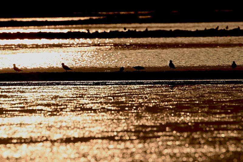 The song of sundown. Beforethesunset Birds SaveAnimals Savetheplanet Savethebird Savetheearth Shorebirds Sandpiper Wildlife & Nature Enjoying Nature